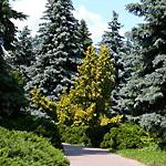 Сад бузків сад магнолій березовий гай