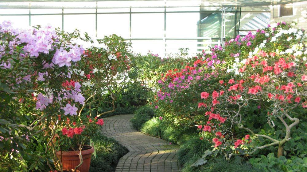 Ботсад.продажа живые цветы лучший подарок на юбилей мужчине